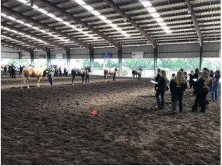 Youth judging a stock type halter class.