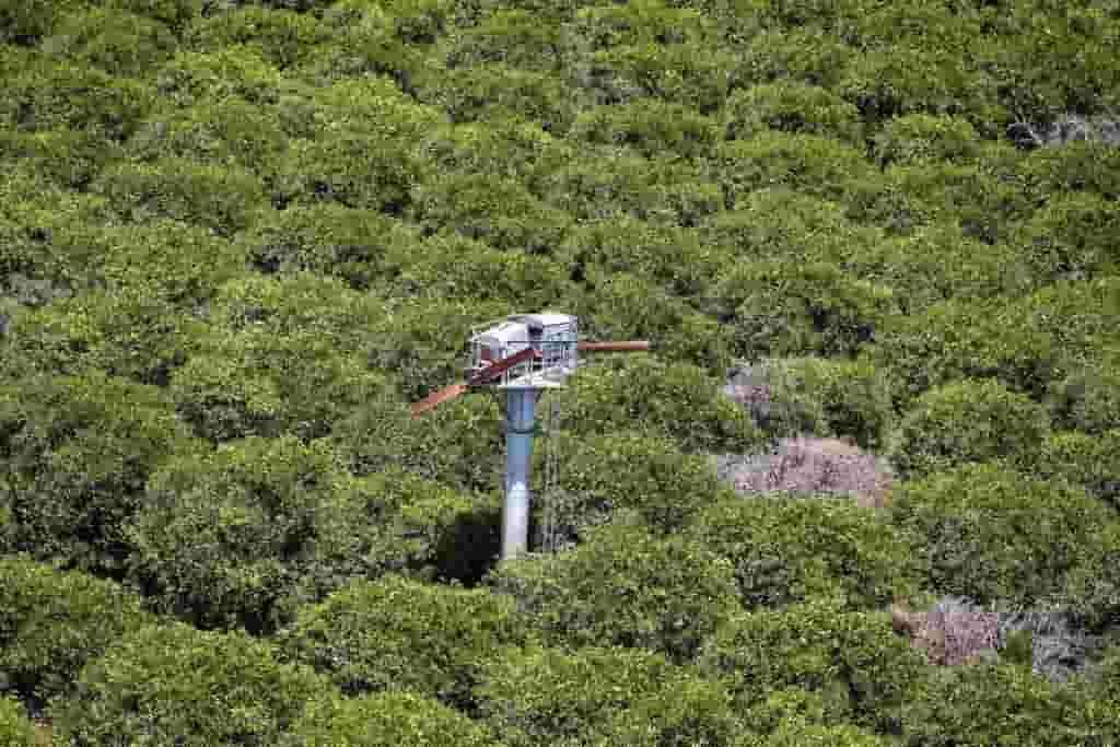 Wind machine protecting citrus trees from frost