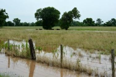 Brazos County field after a flood