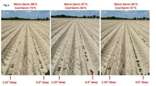 soil moisture would still likely result in poor stands