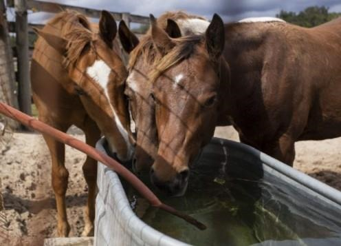 Summer Care for Horses