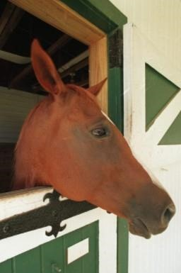 Horse with head out of stall