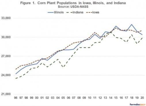 Corn Plant Populations