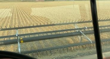 Spring wheat being harvested in Prairie