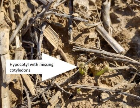 Soil crusting
