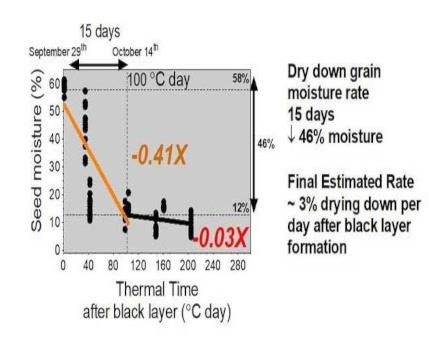 Figure 2. Grain moisture dry down