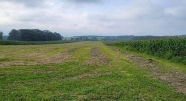 Second cutting grass/legume hay