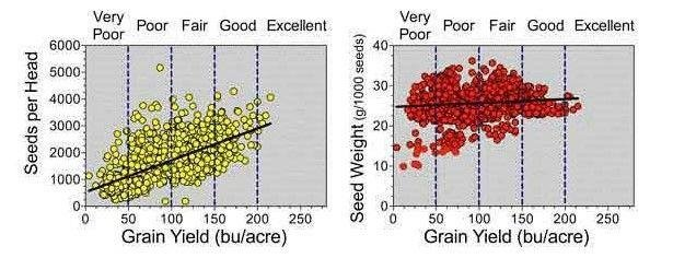 Figure 1. Relationship between grain yield and yield components