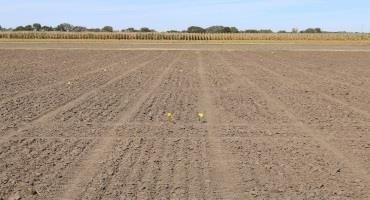Figure 2. Wheat dusted in near Belleville