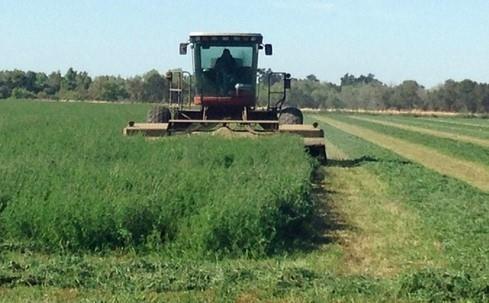 potential profits in growing alfalfa