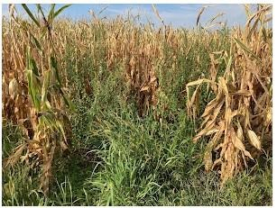 Weeds on field edges can move into crop fields if not controlled