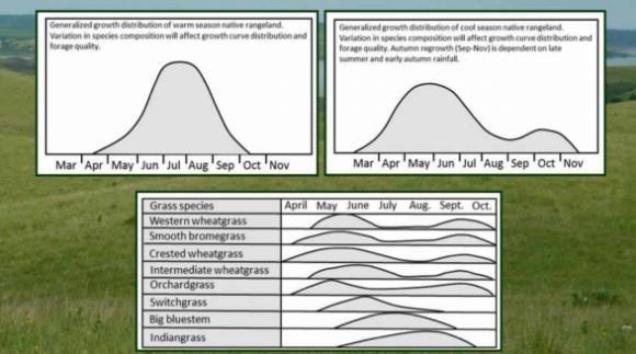 Warm-season and cool-season growth curves