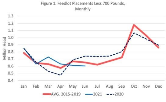 feedlot placements