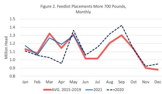 feedlot placements for cattle weighing less