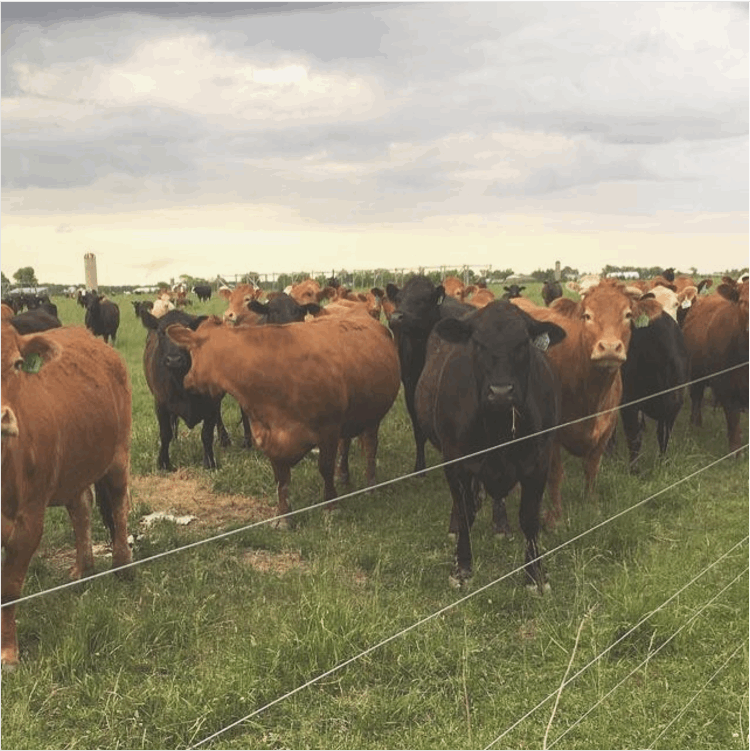 Five life lessons learned by growing up on a farm