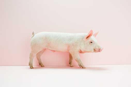 Canadian Centre for Swine Improvement recognizes Alberta man   for work in genetics industry