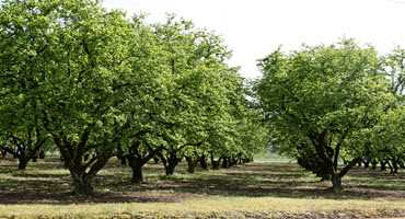 Ontario's hazelnut industry receives multiple investments