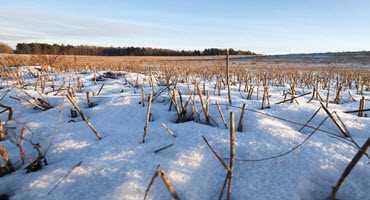 Saskatchewan producers need soil moisture