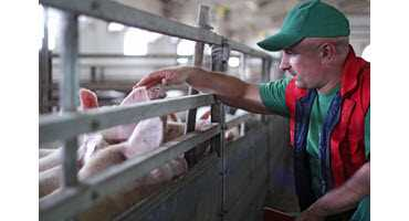 More help on way for U.S. pork producers