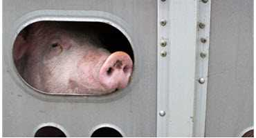 Feds invest in animal welfare initiatives