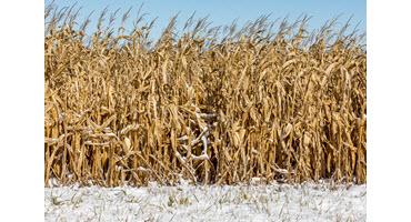 Farmers still making harvest decisions