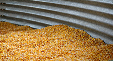 U.S. gov't invests in ag research