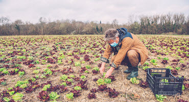 Ont. addresses outbreaks among farm workers