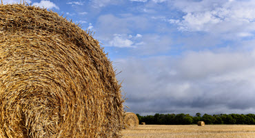 Man. groups call for hay, straw, feed