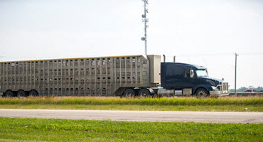 Ont. supports farm animal transporters