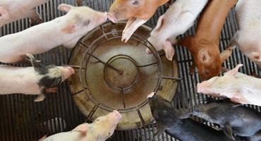 NPPC wants USDA to control gene editing