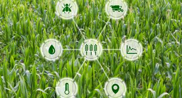 Sensors inform farming decisions