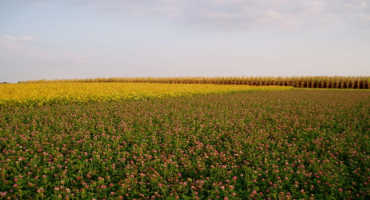 Study: Crop Diversification can Improve Environmental Outcomes without Sacrificing Yields