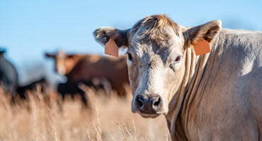 SSGA, SWF look for info on livestock shootings
