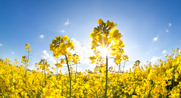 Canola industry provides China update