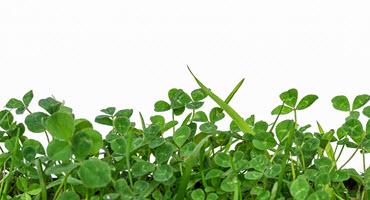 Ont. group seeks feedback on cover crops