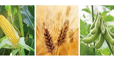 Ontario Farmers intend to plant 6.203 million acres