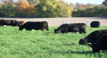 Matching Nutrient Intake to the Production Cycle of Beef Cows