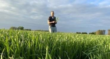 2021 Wheat Fungicide Ratings Available