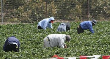 Ag workers exempt from B.C. travel restrictions