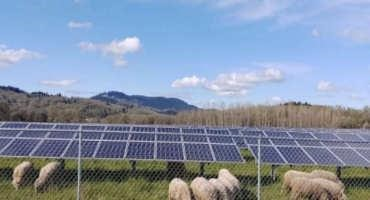 Combining Solar Panels and Lamb Grazing Increases Land Productivity, Study Finds