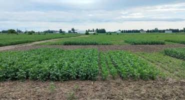 Soybean Planting-Time Management Considerations