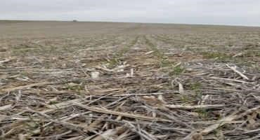Assessing Winter Wheat Stand In the Spring