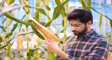 Mutant Corn Gene Boosts Sugar in Seeds, Leaves, May Lead to Breeding Better Crop