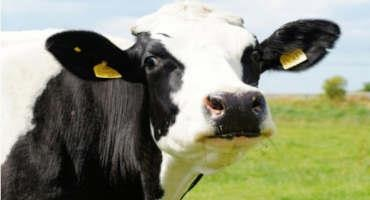 Ways to Increase Milk Production