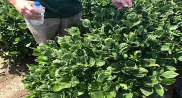 Arkansas State Plant Board Again Loosens Dicamba Restrictions