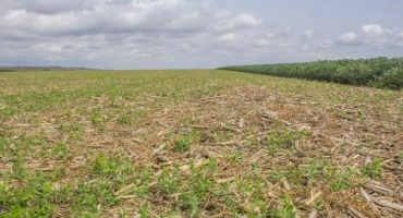 Herbicide Residual Effects on Cover Crops After Corn Silage