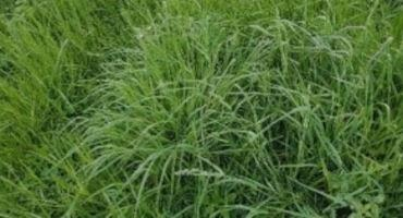 Over Winter Residual Forage Height Impacts Spring Growth and Yield!