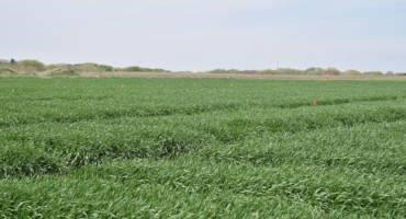 Scout Wheat Fields for Early Disease Detection