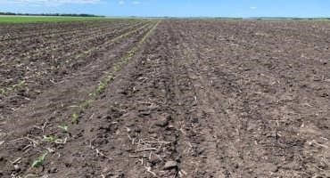 How Early Is Too Early to Plant Row Crops?