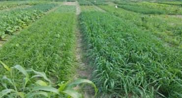 Cover Crops Termination Methods in Michigan